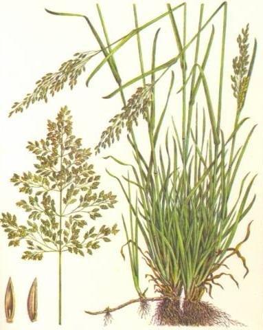 """Какими бывают газоны: виды и характеристики """"зеленых полей"""""""
